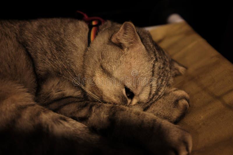 Кот спать в зеленой мягкой уютной софе стоковое фото
