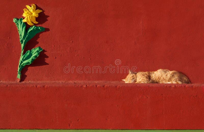 Кот спать в красной предпосылке стены, кот на солнечный день спать в красной предпосылке, кот в iz Zurrieq Wied, Мальта, кот и сл стоковые изображения rf