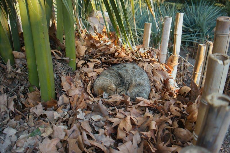 Кот спать в парке стоковое фото