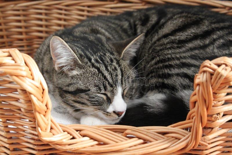 Кот спать в плетеной корзине стоковое изображение