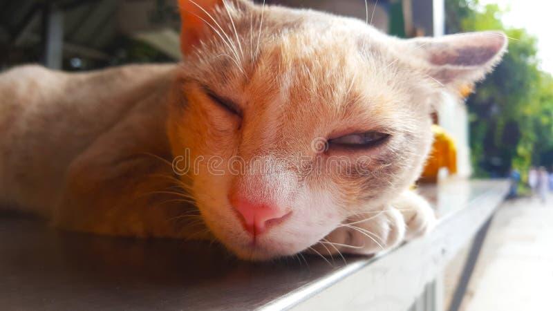Кот спать, животное милое стоковые изображения rf