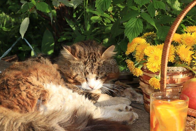 Кот спать на деревянном столе в саде лета стоковое изображение
