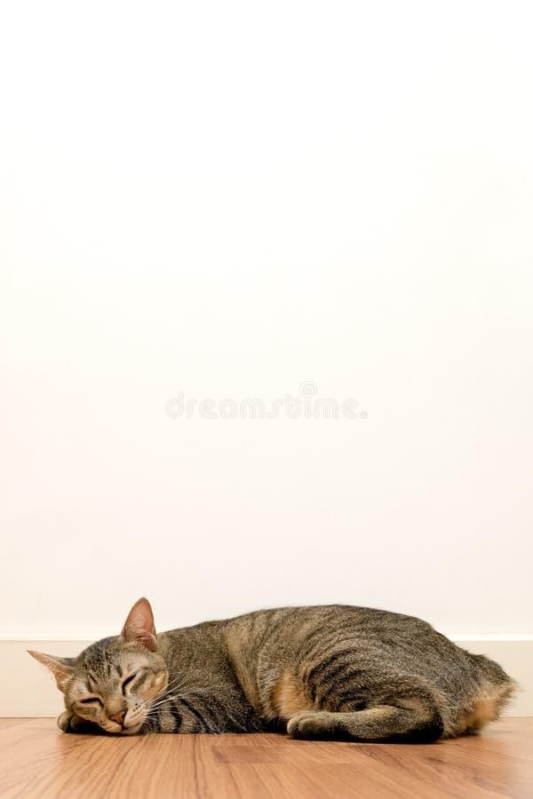 Кот спать на деревянном поле с белой стеной пустого пространства прелестные глаза конца остатков кота дома стоковое фото rf