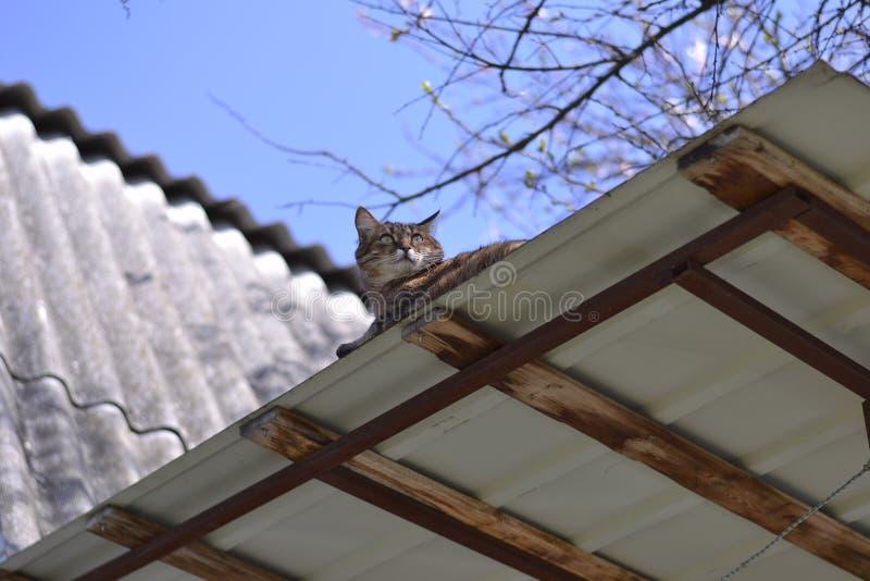 Кот спать на крыше стоковые фото