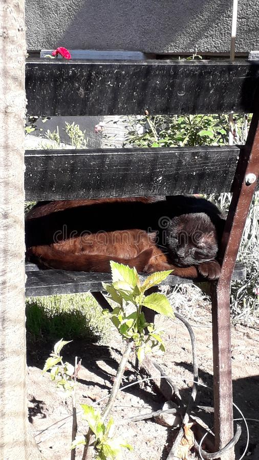 Кот спать на стенде в саде стоковые изображения rf