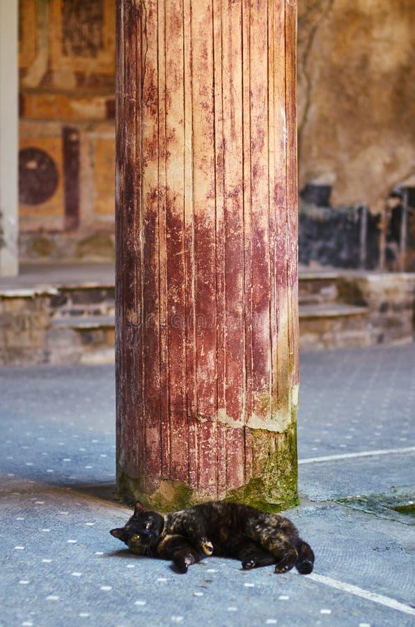 Кот спать под столбцом старого римского дома в Помпеи стоковые изображения rf
