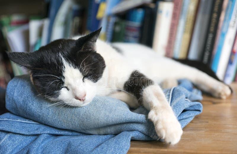 Кот спать черно-белый стоковая фотография rf