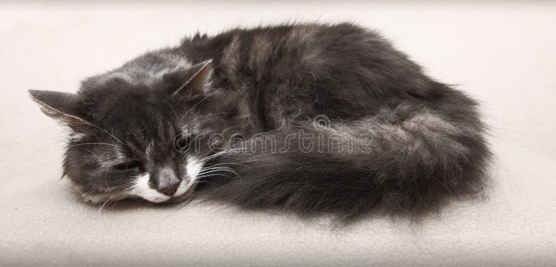 Кот спать