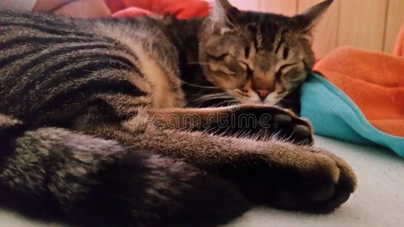 Кот спать taby стоковое фото