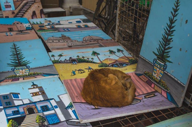 Кот спит на изображении в Medina стоковое фото