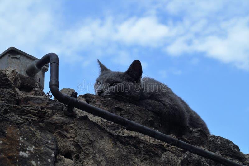 Кот спит на стене стоковое изображение