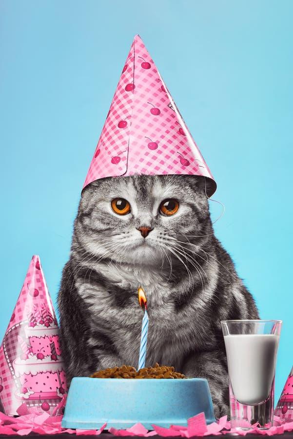 день котом картинки рождения с