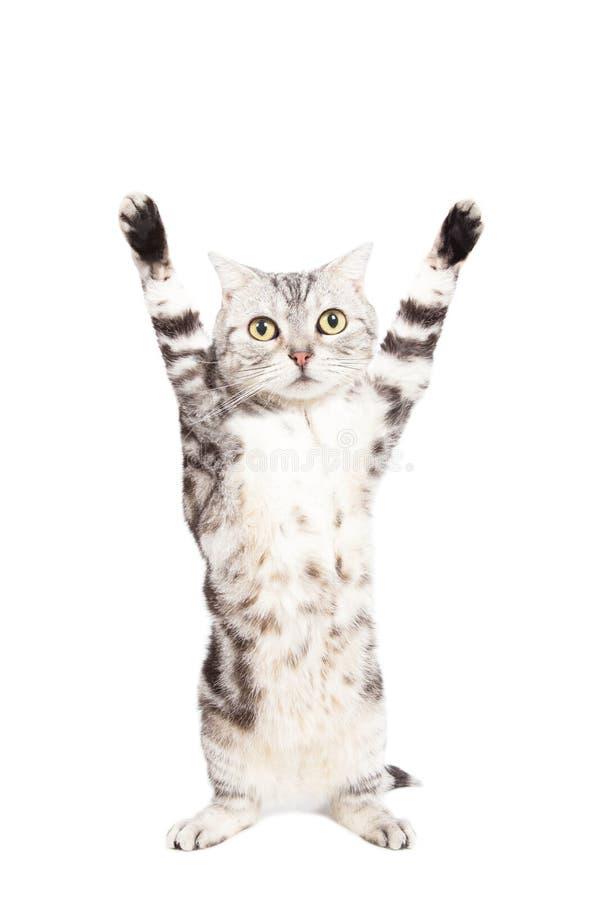 применяться кот руки в боки картинки настолько