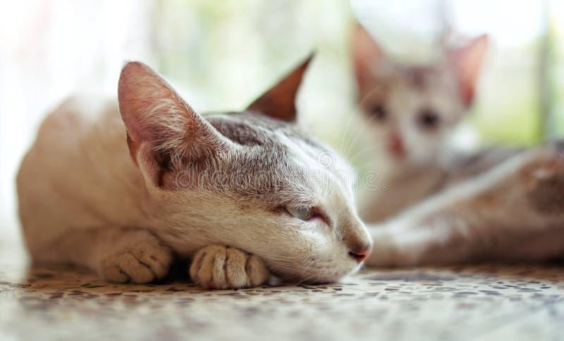 Кот с ее котенком стоковые изображения rf