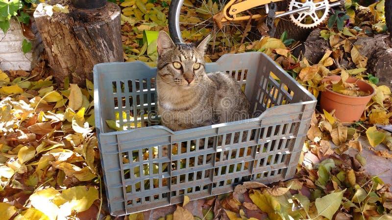Кот с листьями дерева стоковое фото rf