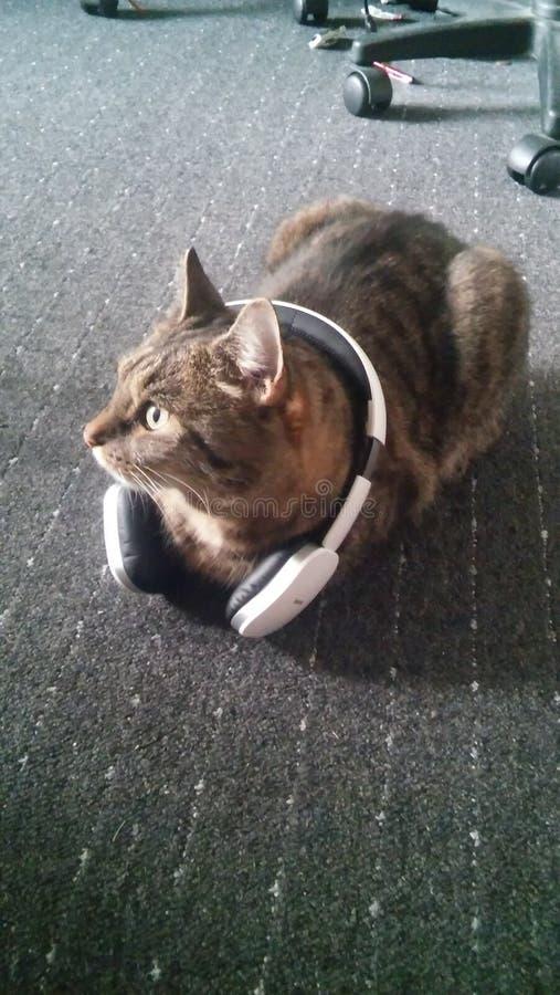 Кот с наушниками стоковое фото rf