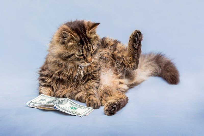 Кот с поднятой лапкой лежит около пачки dollars_ стоковые изображения rf