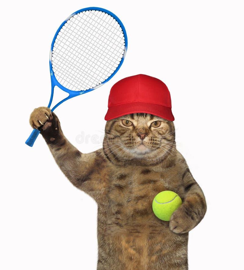 Кот с ракеткой и шариком тенниса стоковое изображение
