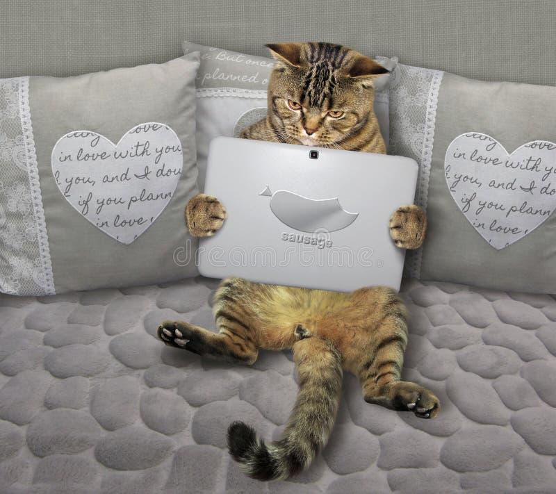 Кот с тетрадью на серой софе стоковая фотография