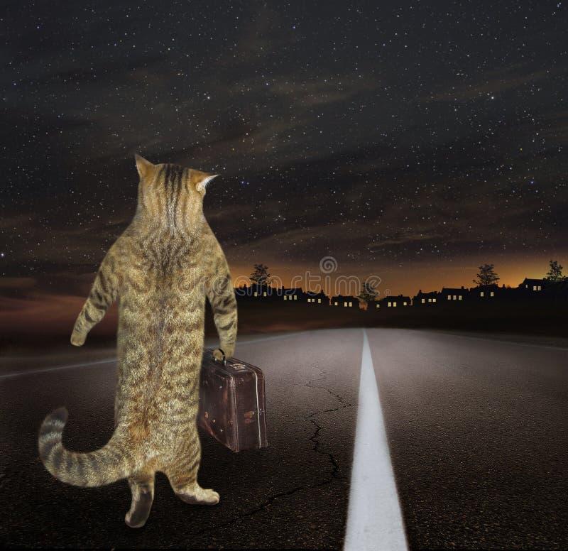 Кот с чемоданом стоковая фотография