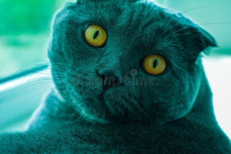 Кот с янтарными глазами стоковое фото