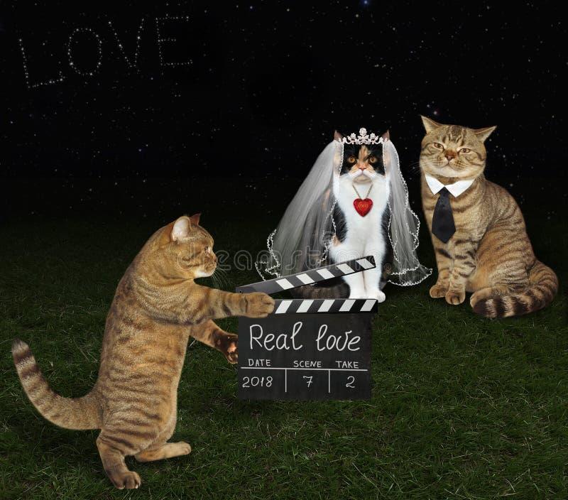 Кот с clapboard и новобрачными 2 стоковое изображение