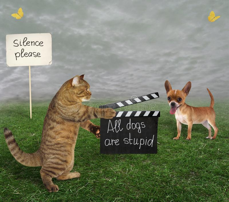 Кот с clapboard и собака стоковое фото