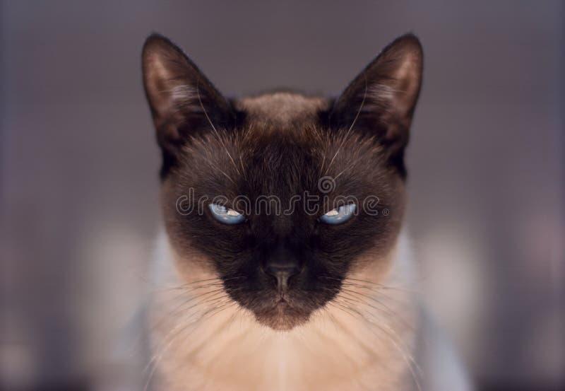 Кот, тайский стоковое фото rf