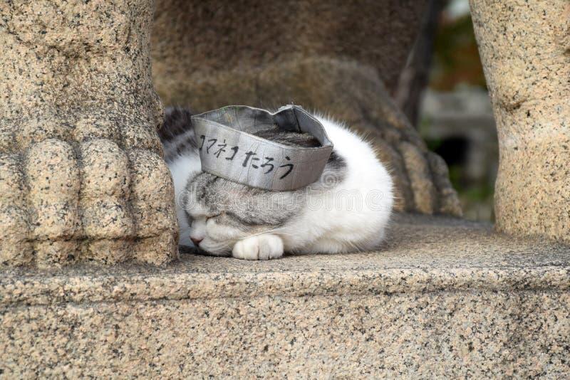Кот таро святыни Sumiyoshi Taisha, Осака стоковая фотография rf