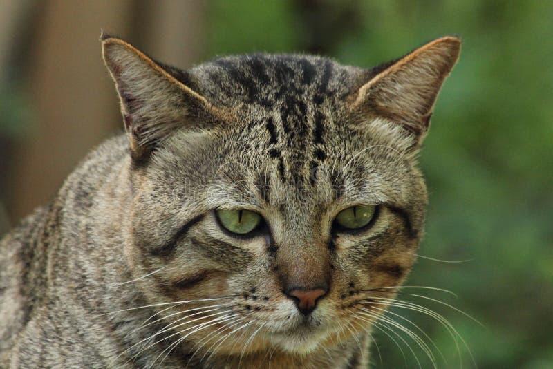 Кот тигра стоковая фотография