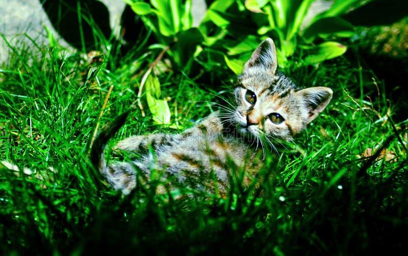 Кот Томми стоковое изображение