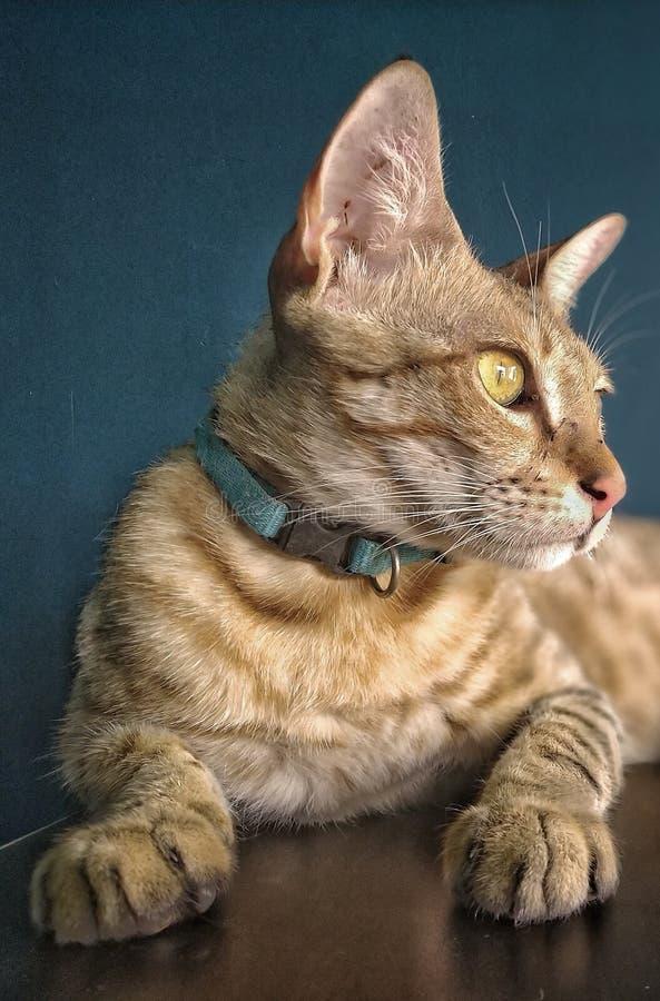 Кот трудного вопроса стоковая фотография rf