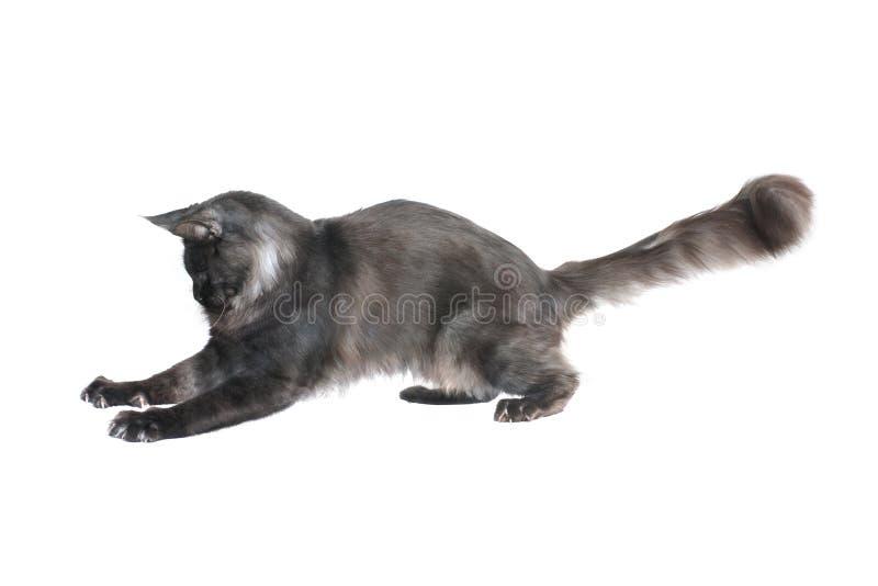 Кот улавливает prey стоковые изображения