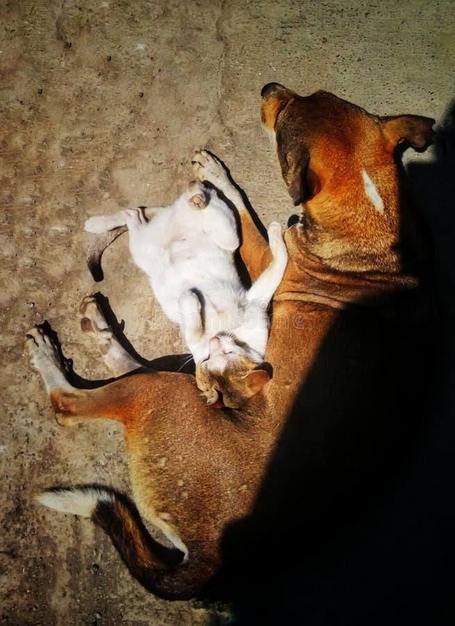 Кот улицы используя cusion Асира собаки в холодных днях пока кладущ в солнечный свет стоковое фото rf