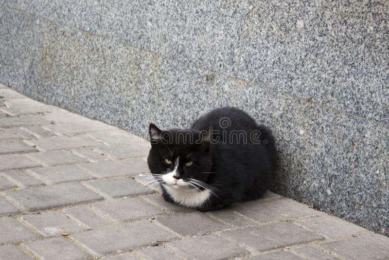 Кот улицы черно-белый стоковая фотография