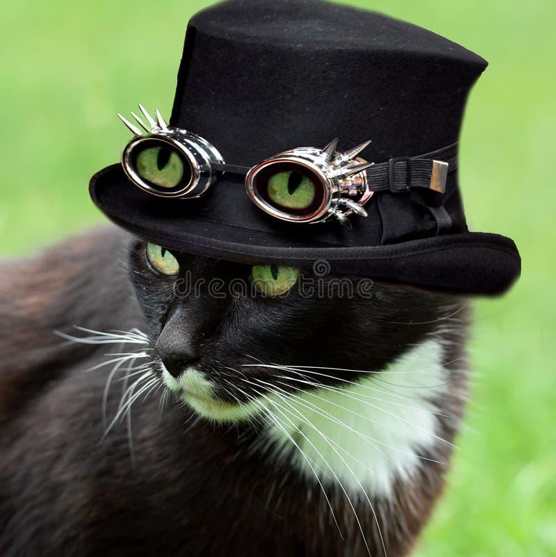 Кот хеллоуина стоковые изображения