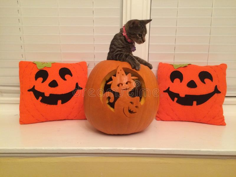 Кот хеллоуина стоковая фотография