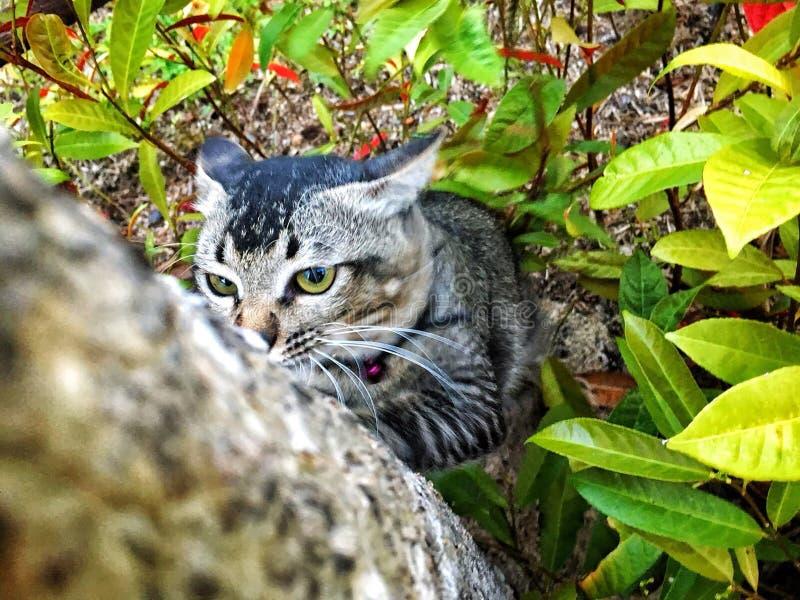 Кот царапая дерево стоковые изображения rf