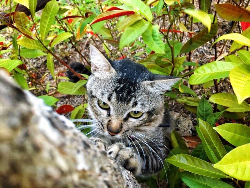 Кот царапая дерево стоковое фото rf