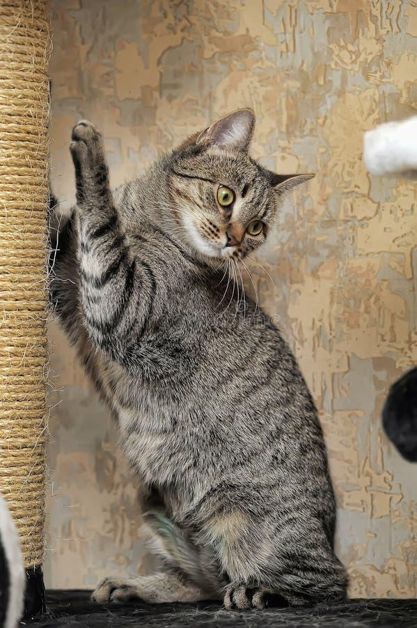 Кот царапая столб стоковая фотография