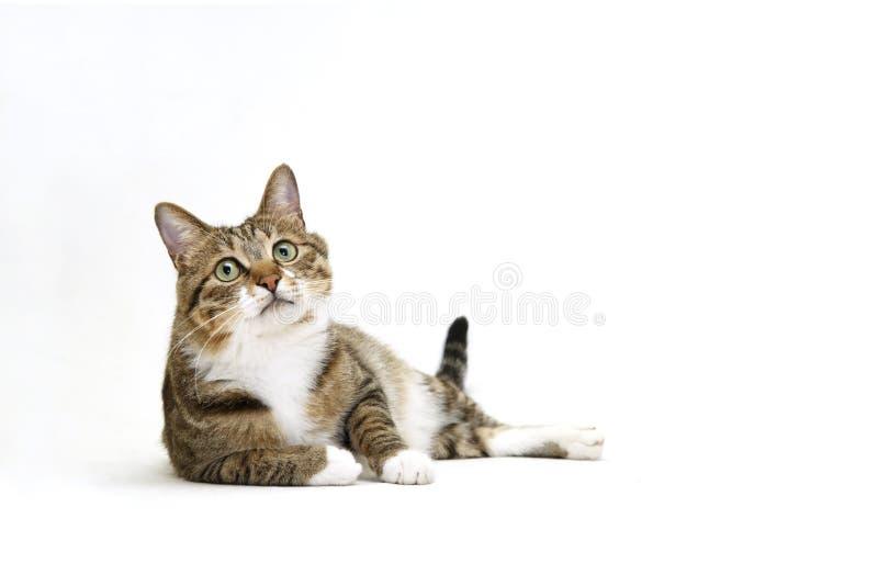 кот шаловливый стоковое фото