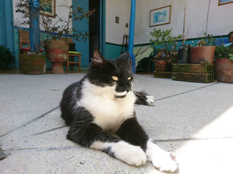 кот шикарный стоковые фото