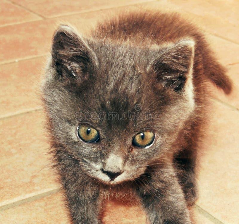 Кот щенка стоковое фото rf