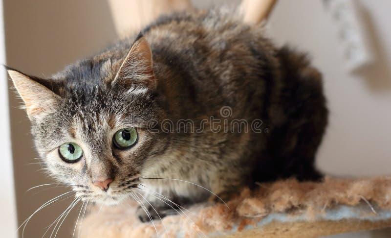 кот любознательний стоковые изображения