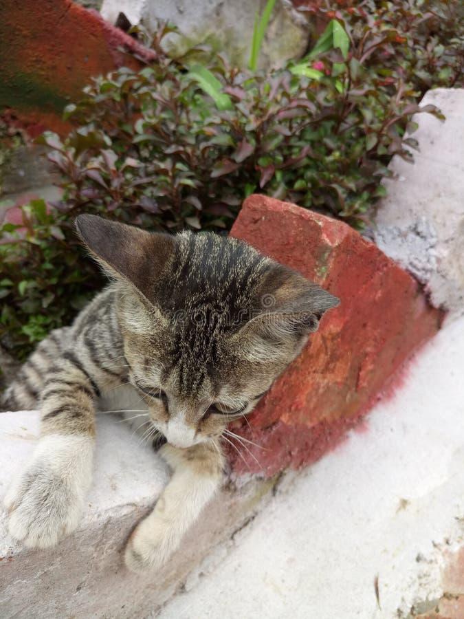 Кот стоковая фотография rf