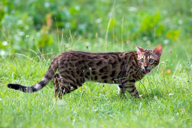 Download Кот стоковое фото. изображение насчитывающей котенок - 33729780