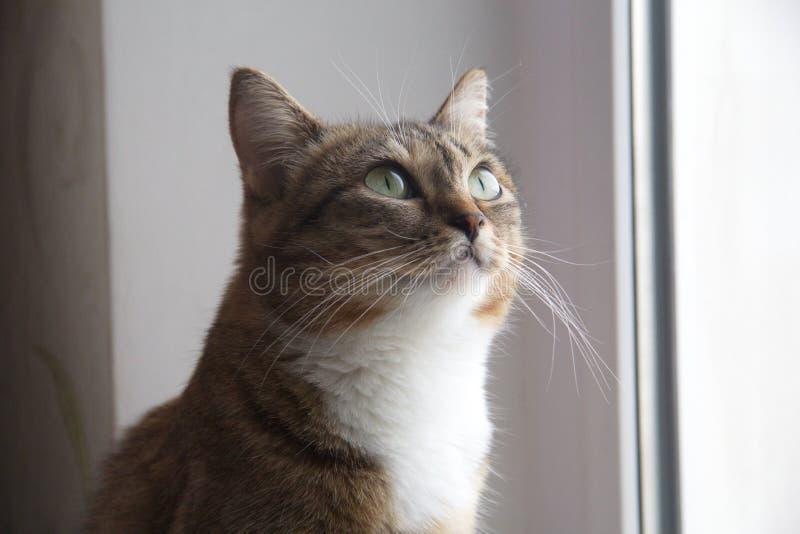 Download Кот стоковое изображение. изображение насчитывающей кролик - 40583419