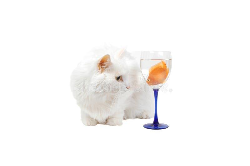 Download кот 5 голодный стоковое изображение. изображение насчитывающей жизнь - 482663