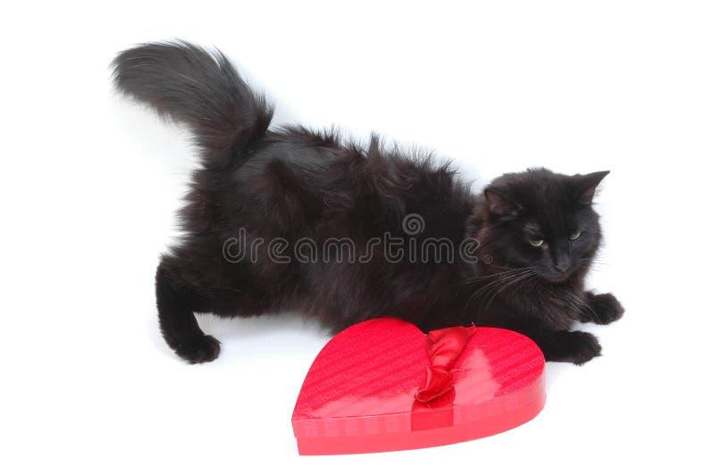 Download кот 6 романтичный стоковое фото. изображение насчитывающей красно - 482580