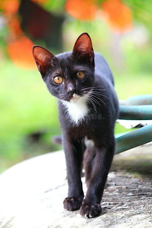 Кот Blak стоковое фото rf